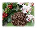 Kredit hodnota 457 káva Brazilie Facenda